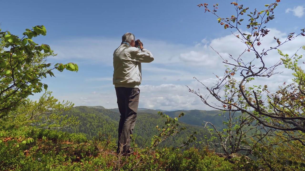 周末去法国自然保护区中看看绿色,了解森林如何生生不息🌳