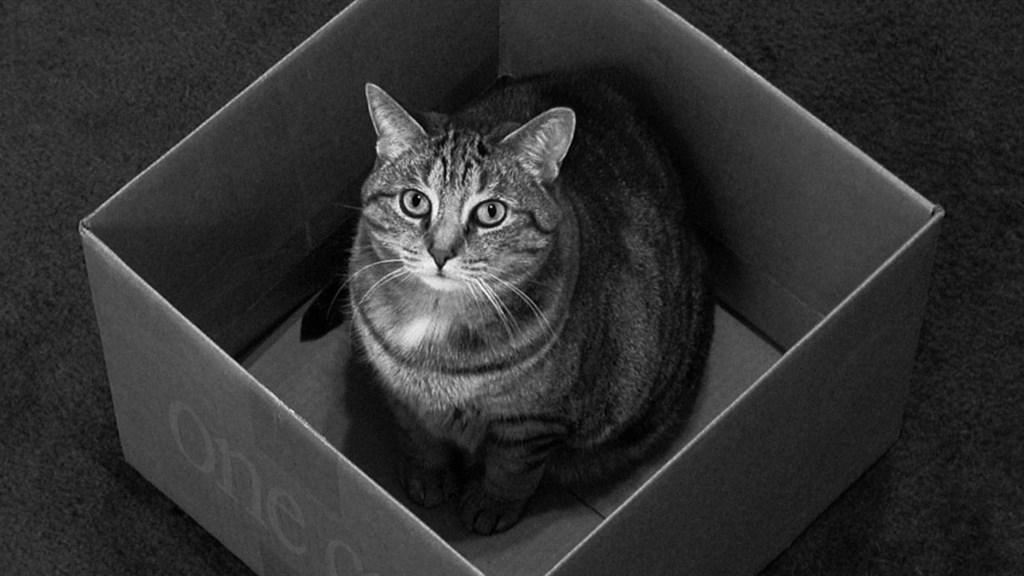 """趣味科普:""""薛定谔的猫""""到底是啥?"""