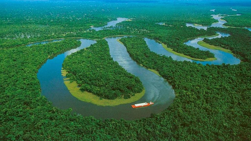 趣味科普:🌳 为何亚马逊雨林如此重要?